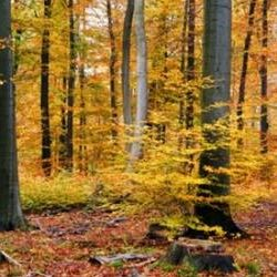 5 Reasons to Call your County Forester