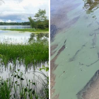 Lake Plants and Cyanobacteria