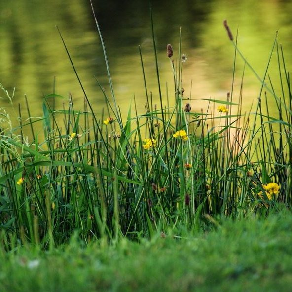 Lawn Care within the Protected Shoreline