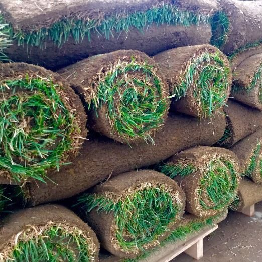 Sod and Turf