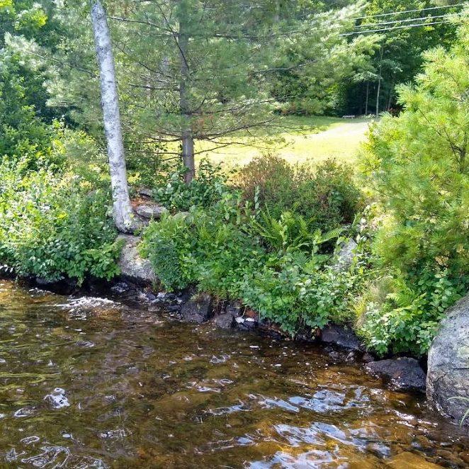 Native Shoreland Riparian Buffer Plantings for New Hampshire