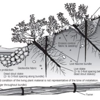 Natural Erosion Prevention Techniques