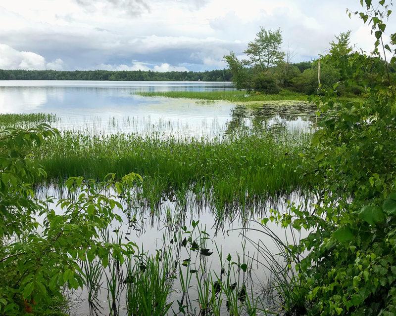 healthy aquatic vegetation nh lakes
